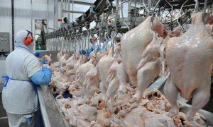 Tuyển công nhân chế biến thịt gà – RU115